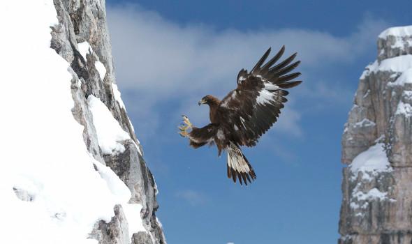 Der Schrei des Adlers (TV Documentary)